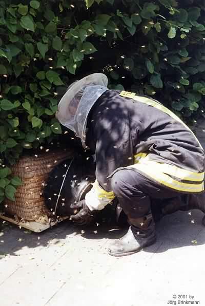 Bienen im Holzwurmviertel - 18.06.2000